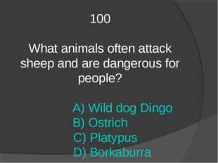 100 What animals often attack sheep and are dangerous for people? A) Wild dog