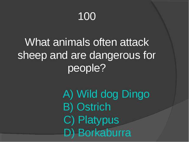 100 What animals often attack sheep and are dangerous for people? A) Wild dog...