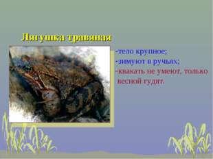 Лягушка травяная тело крупное; зимуют в ручьях; квакать не умеют, только весн