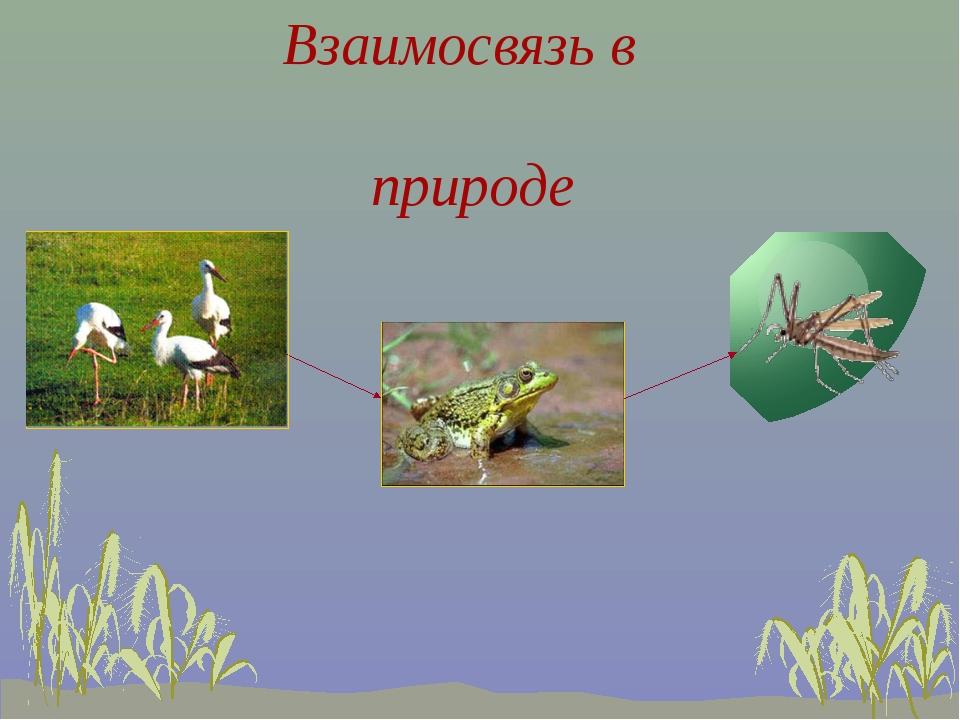 Взаимосвязь в природе