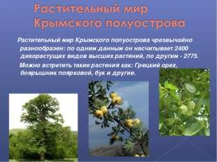 Растительный мир Крымского полуостровачрезвычайно разнообразен: по одним д