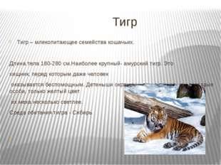 Тигр Тигр – млекопитающее семейства кошачьих. Длина тела 180-280 см.Наиболее