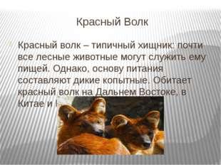 Красный Волк Красный волк – типичный хищник: почти все лесные животные могут