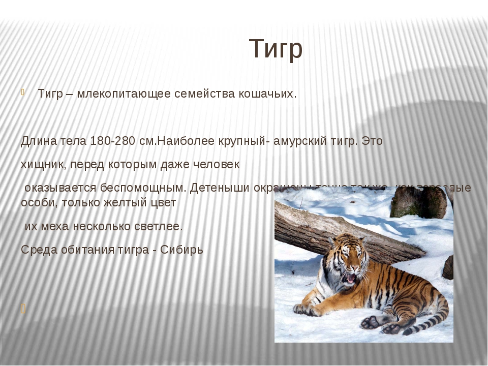 Тигр Тигр – млекопитающее семейства кошачьих. Длина тела 180-280 см.Наиболее...