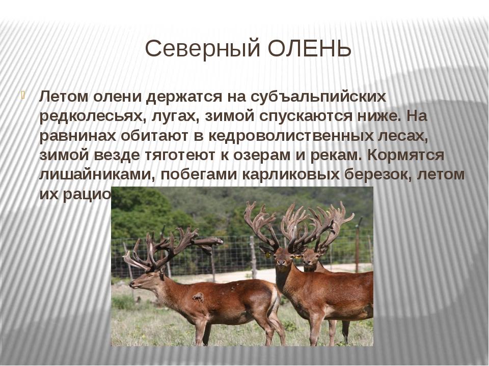 образом, помимо все об оленях фото описание видов несколько минут посадки
