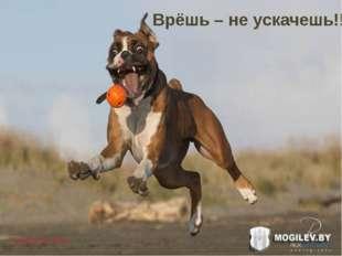 Чубарова Ира Врёшь – не ускачешь!!!