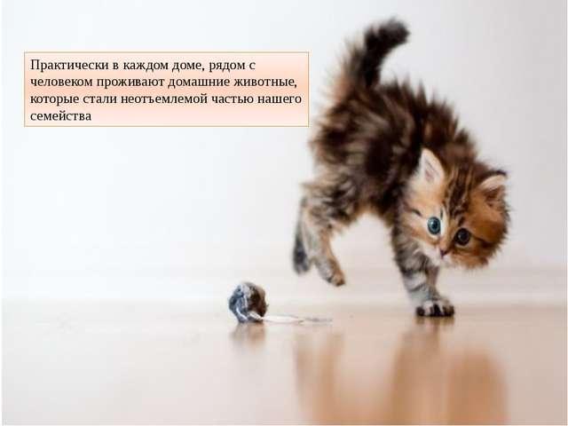 Практически в каждом доме, рядом с человеком проживают домашние животные, кот...