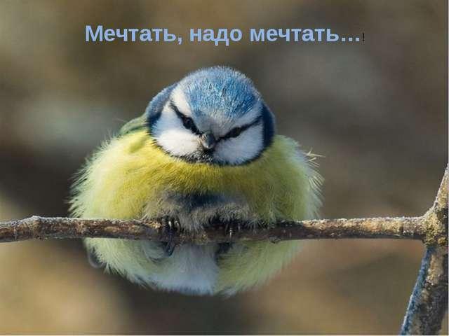 Мечтать, надо мечтать…!
