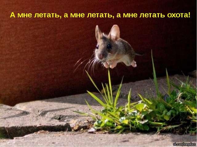 А мне летать, а мне летать, а мне летать охота!
