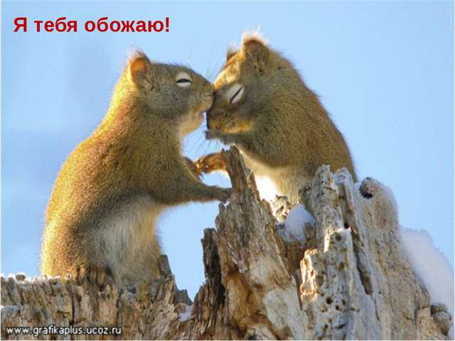 Я тебя обожаю!