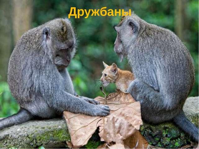Дружбаны
