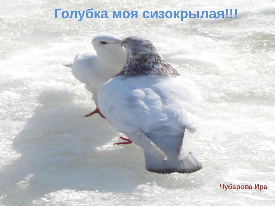 Голубка моя сизокрылая!!! Чубарова Ира