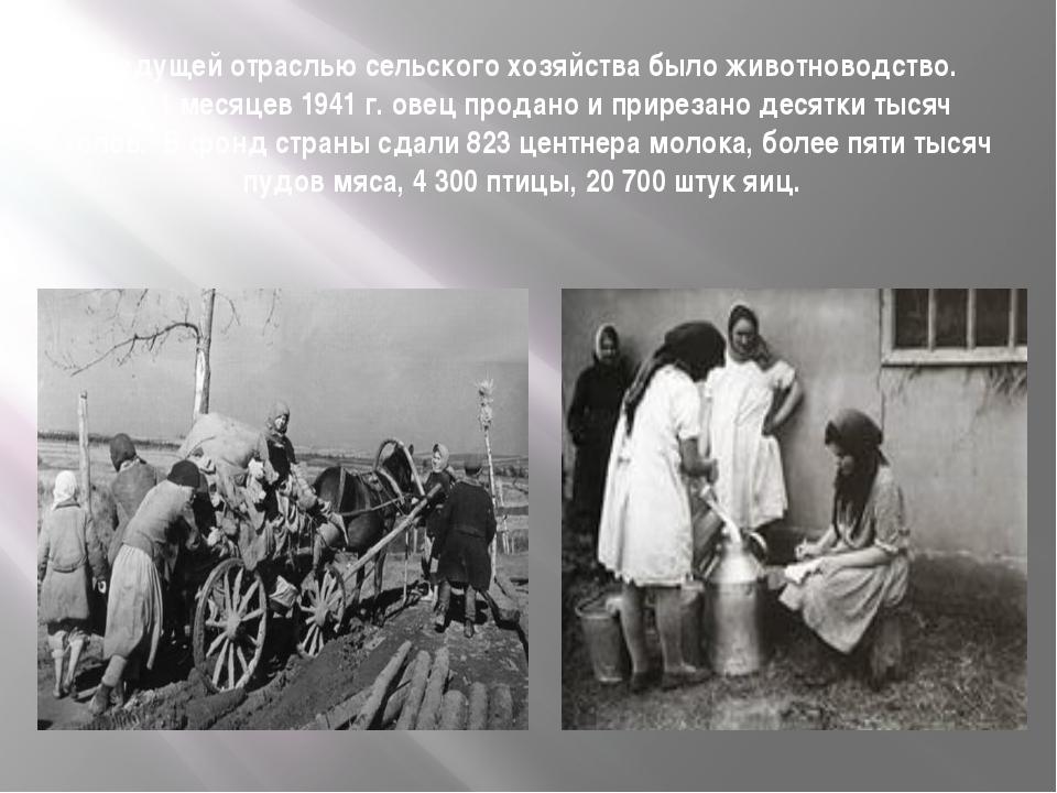 Ведущей отраслью сельского хозяйства было животноводство. За 11 месяцев 1941...
