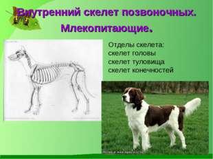 Внутренний скелет позвоночных. Млекопитающие. Отделы скелета: скелет головы с