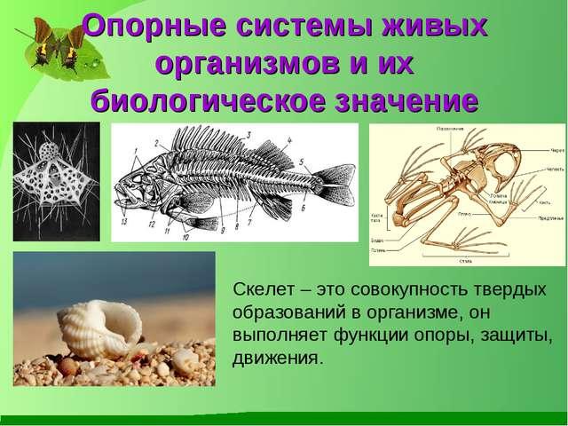 Опорные системы живых организмов и их биологическое значение Скелет – это сов...