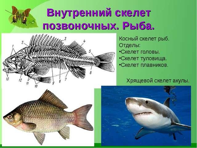 Внутренний скелет позвоночных. Рыба. Косный скелет рыб. Отделы: Скелет головы...