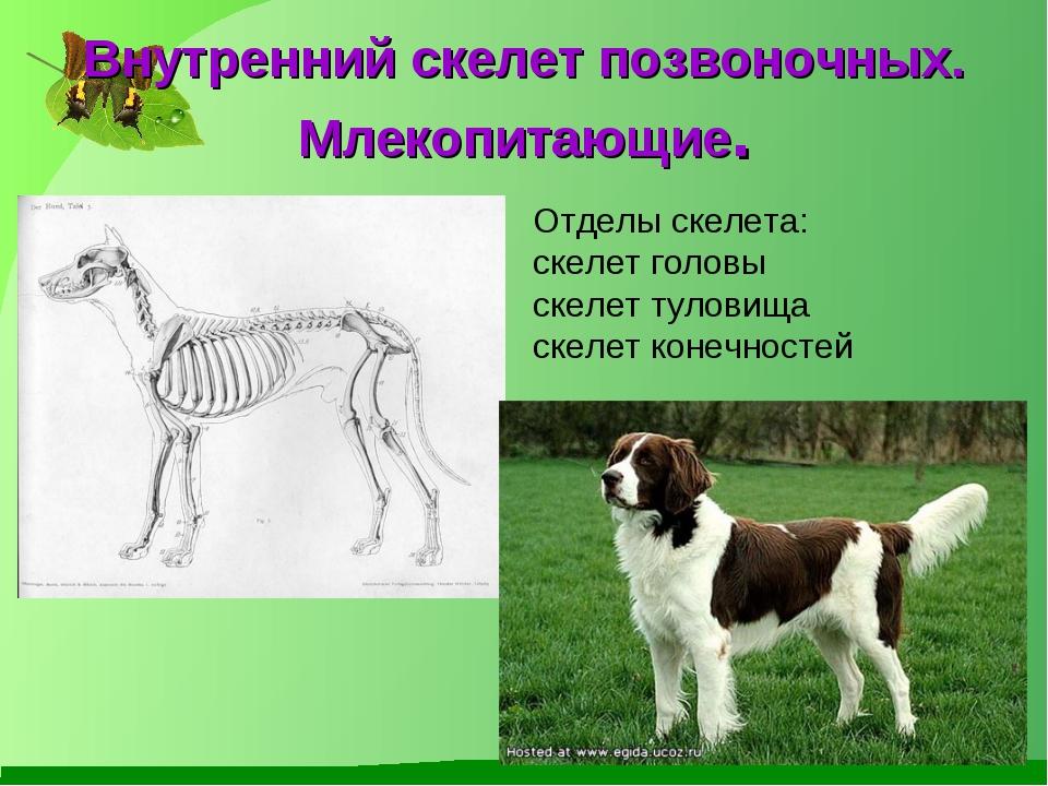 Внутренний скелет позвоночных. Млекопитающие. Отделы скелета: скелет головы с...