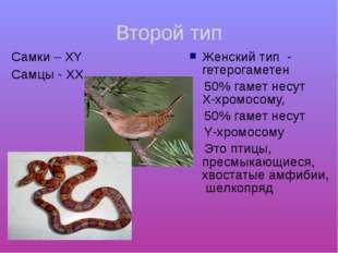 Второй тип Cамки – ХY Самцы - ХХ Женский тип - гетерогаметен 50% гамет несут
