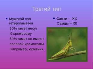 Третий тип Мужской пол гетерогаметен 50% гамет несут Х-хромосому 50% гамет не