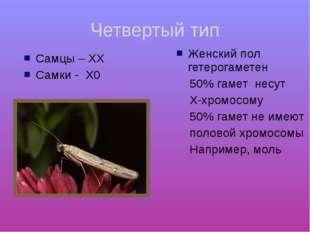 Четвертый тип Самцы – ХХ Самки - Х0 Женский пол гетерогаметен 50% гамет несут