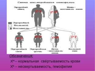 Обозначения: ХН – нормальная свёртываемость крови Xh – несвертываемость, гемо