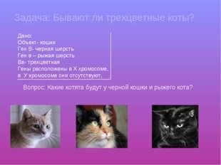 Задача: Бывают ли трехцветные коты? Дано: Объект- кошки Ген В- черная шерсть
