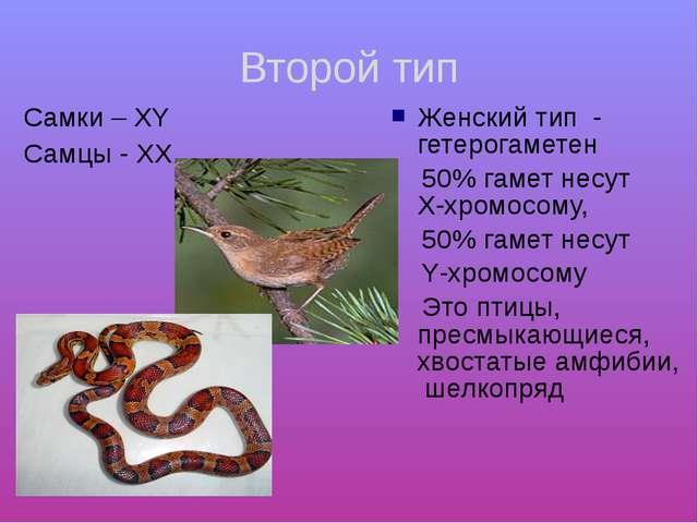 Второй тип Cамки – ХY Самцы - ХХ Женский тип - гетерогаметен 50% гамет несут...