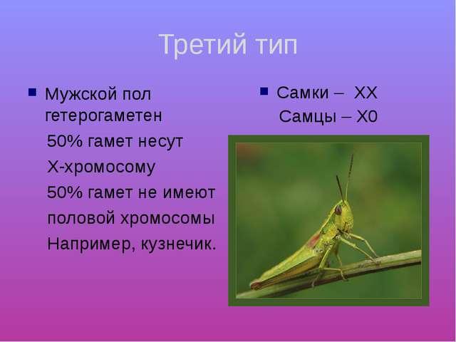 Третий тип Мужской пол гетерогаметен 50% гамет несут Х-хромосому 50% гамет не...