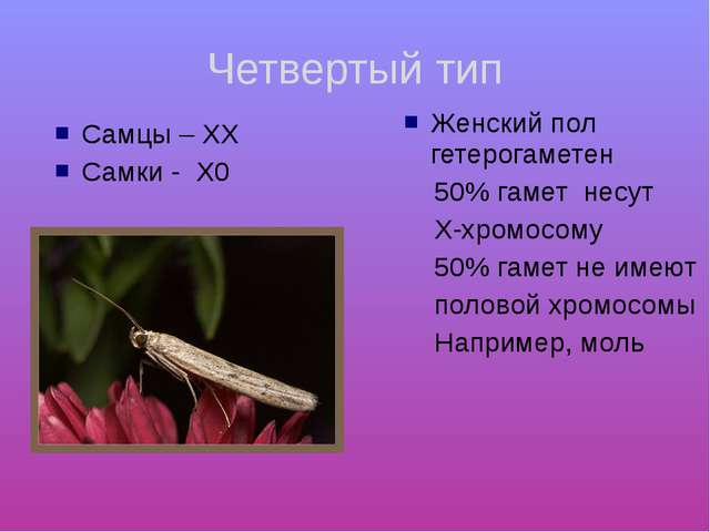 Четвертый тип Самцы – ХХ Самки - Х0 Женский пол гетерогаметен 50% гамет несут...