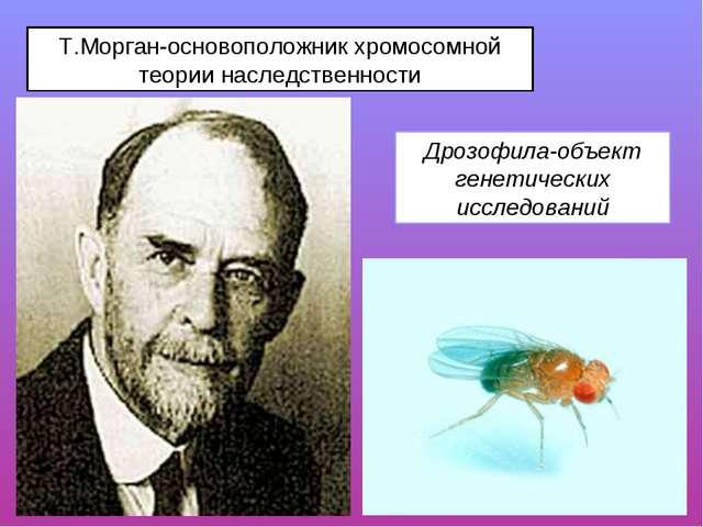 Т.Морган-основоположник хромосомной теории наследственности Дрозофила-объект...