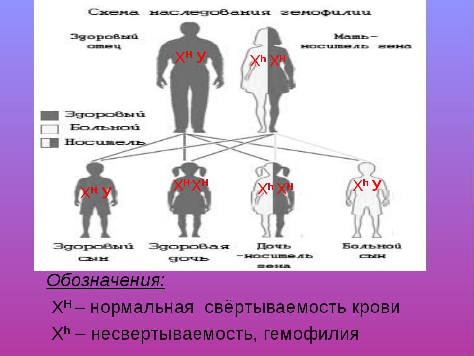 Обозначения: ХН – нормальная свёртываемость крови Xh – несвертываемость, гемо...