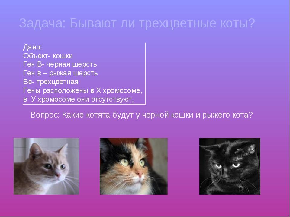Задача: Бывают ли трехцветные коты? Дано: Объект- кошки Ген В- черная шерсть...
