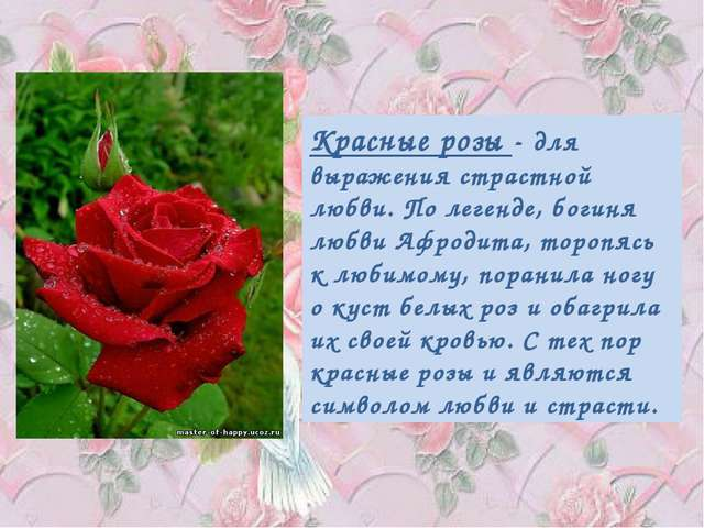 Красные розы - для выражения страстной любви. По легенде, богиня любви Афрод...