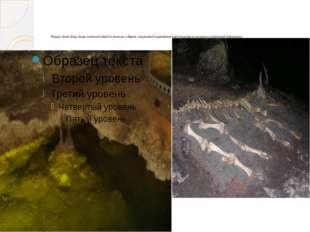 Пещера Эмине-Баир-Хосар считается одной из немногих в Европе, сохранившей пер