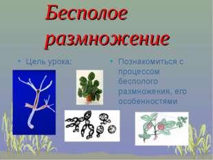 Бесполое размножение Цель урока: Познакомиться с процессом бесполого размнож