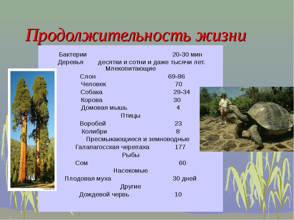 Бактерии 20-30 мин Деревья десятки и сотни и даже тысячи лет. Млекопитающие С...