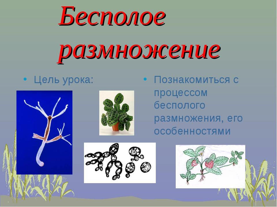Бесполое размножение Цель урока: Познакомиться с процессом бесполого размнож...