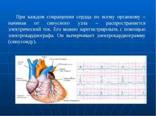 При каждом сокращении сердца по всему организму – начиная от синусного узл