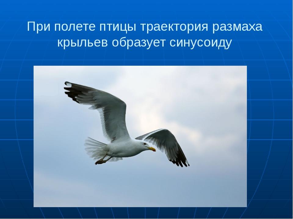При полете птицы траектория размаха крыльев образует синусоиду
