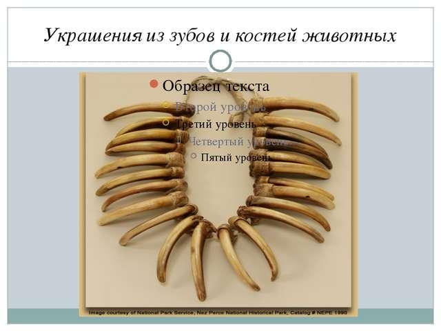 Украшения из зубов и костей животных