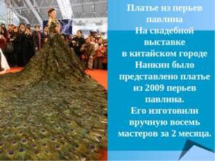 Платье из перьев павлина На свадебной выставке вкитайском городе Нанкин было