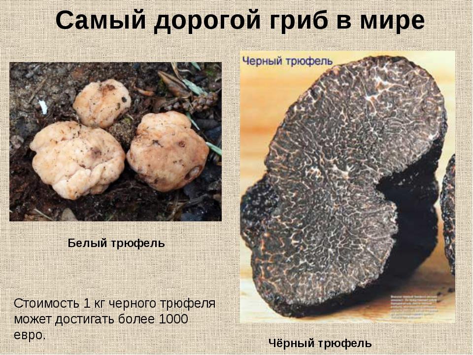 Как приготовить трюфели гриб в домашних условиях