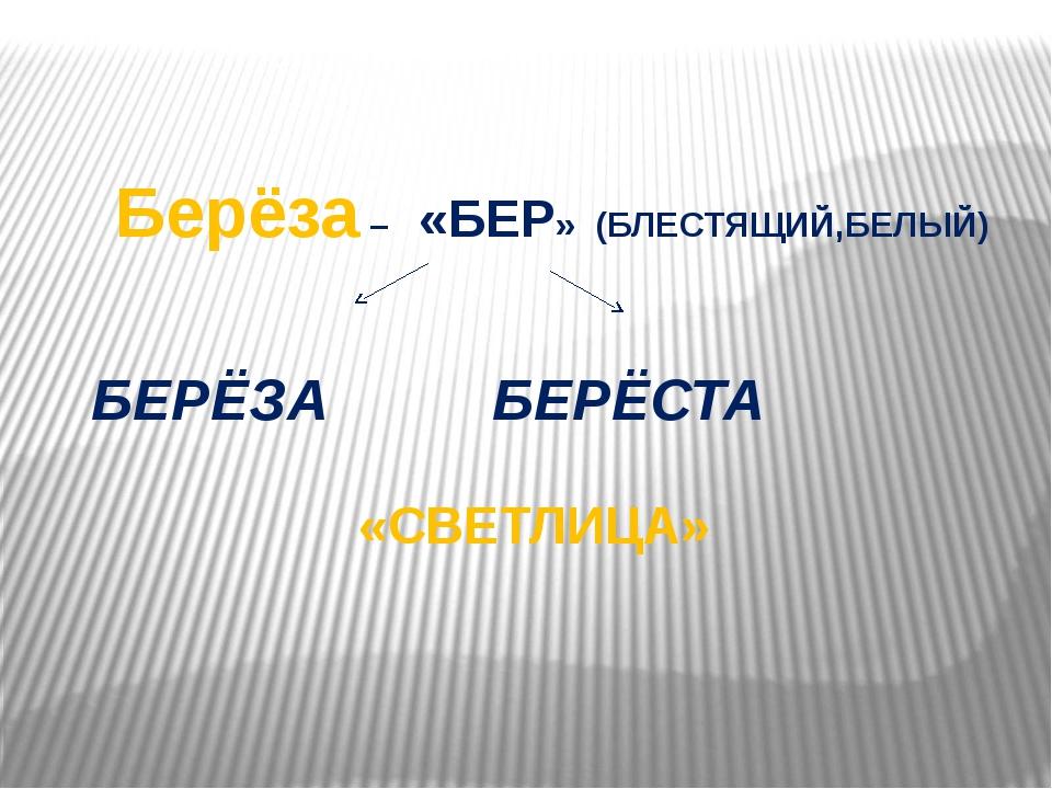 Берёза – «БЕР» (БЛЕСТЯЩИЙ,БЕЛЫЙ) БЕРЁЗА БЕРЁСТА «СВЕТЛИЦА»