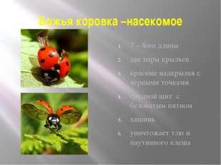 Божья коровка –насекомое 7 – 8мм длины две пары крыльев красные надкрылья с ч