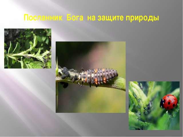 Посланник Бога на защите природы