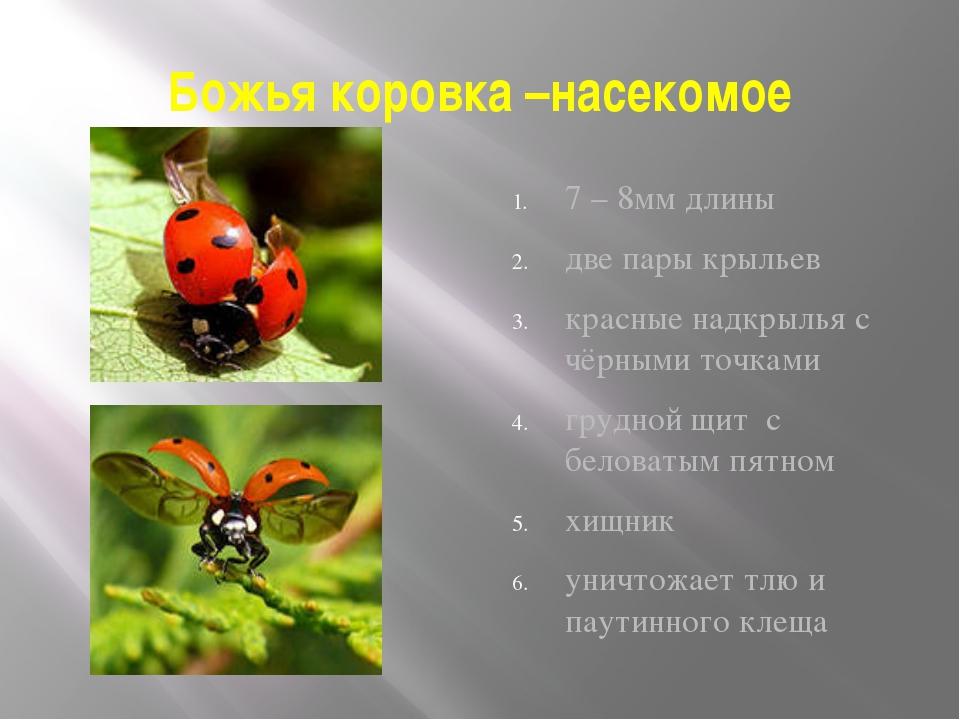 Божья коровка –насекомое 7 – 8мм длины две пары крыльев красные надкрылья с ч...