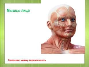 Мышцы лица Определяют мимику, выразительность