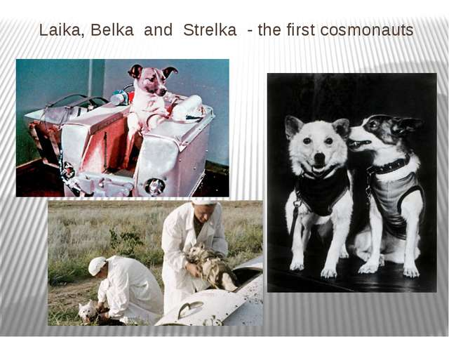 Laika, Belka and Strelka - the first cosmonauts