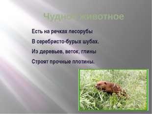 Чудное животное Есть на речках лесорубы В серебристо-бурых шубах. Из дерев