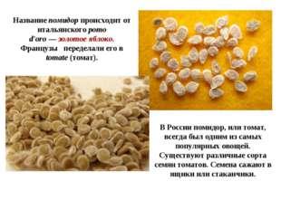 В России помидор, или томат, всегда был одним из самых популярных овощей. Сущ